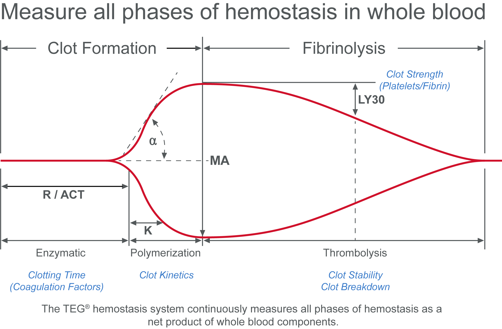 Measure all phases of hemostasis in whole blood